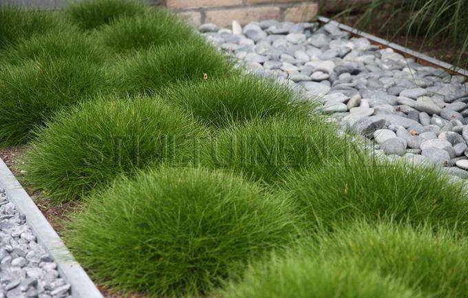 Onwijs leuk voor in de voortuin, gras met grind. Foto geplaatst door TV-28