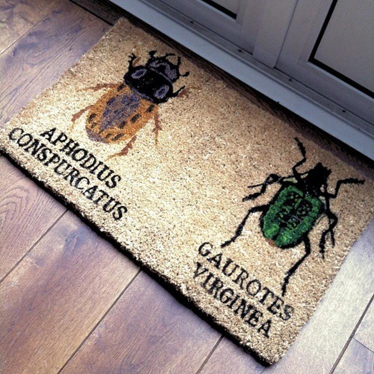 Afbeeldingen Van Insecten