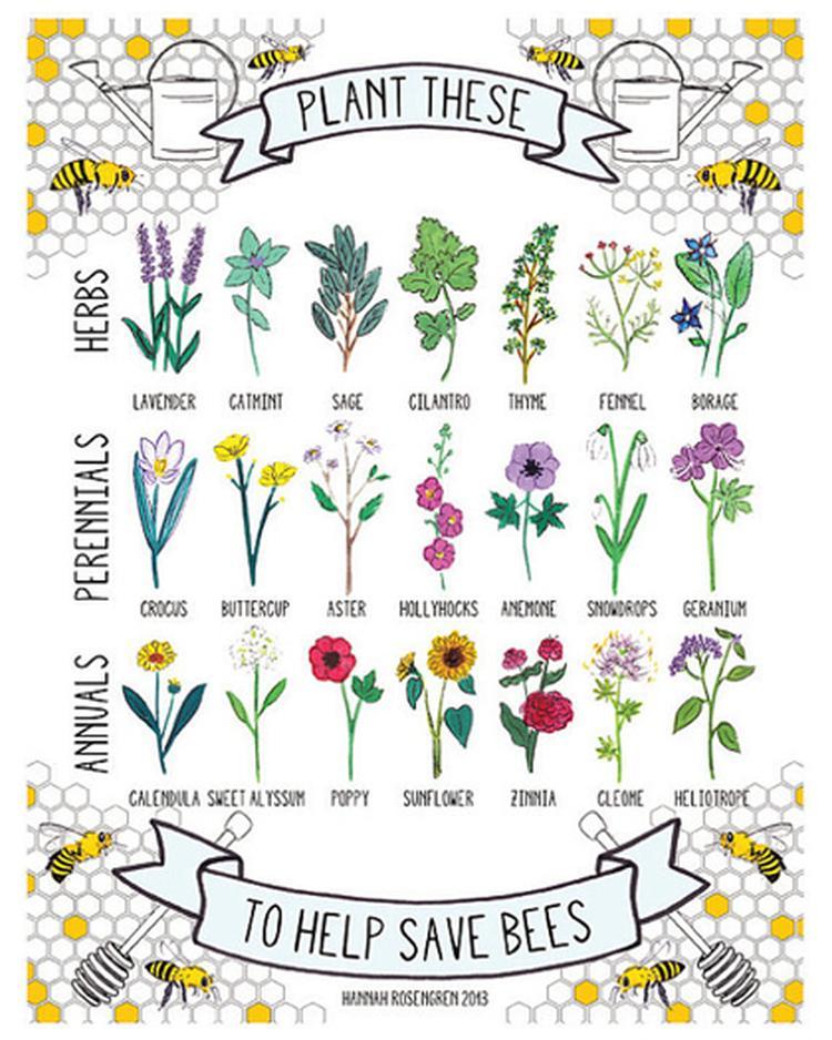Planten Voor Bijen.Planten Waar Bijen Blij Van Worden En Wij Dus Ook Foto