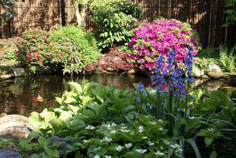 Oosterse Tuin Ideeen : Oosterse tuin ideeen best ideeen schutting tuin simple zwarte