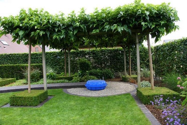Bomen In Tuin : Leuke bomen voor in de tuin. foto geplaatst door ruudbrouwers81 op