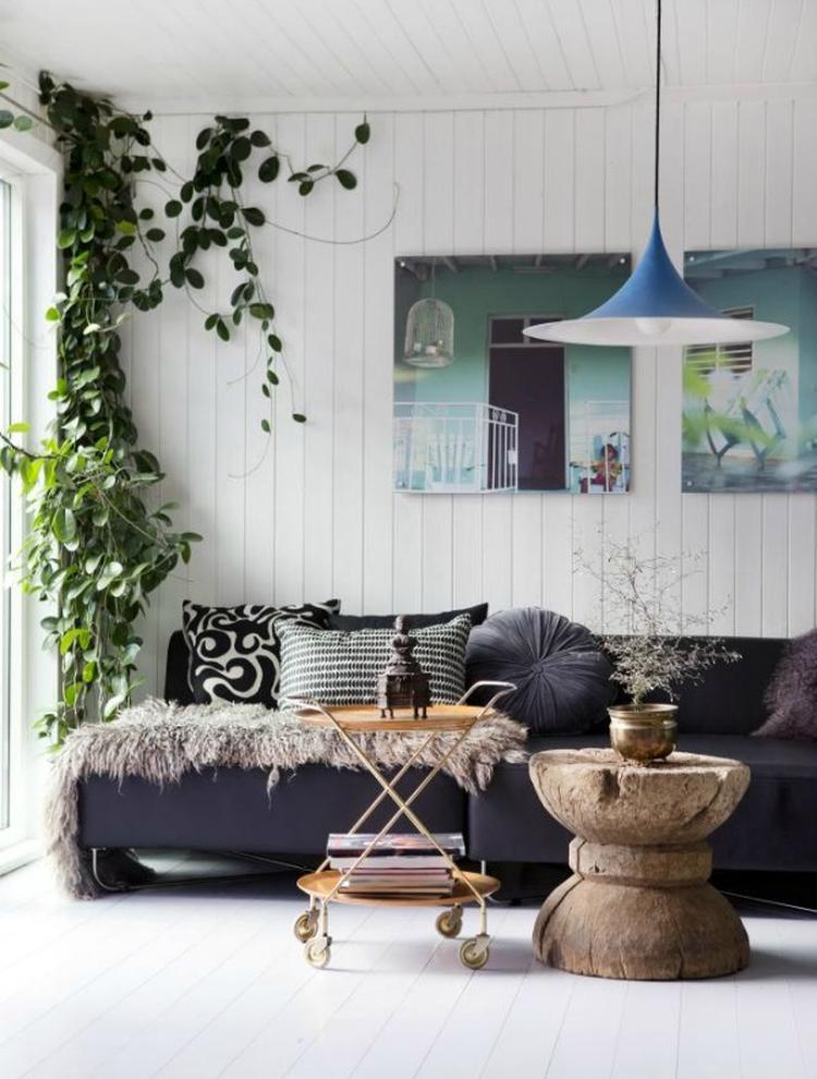 Een klimplant in de woonkamer! (eens iets anders). Foto geplaatst ...