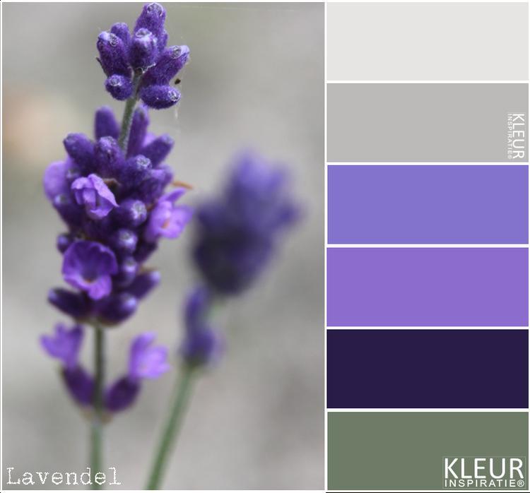 LAVENDEL - Kleurenpalet paars / lila deze combineren mooi met grijs ...