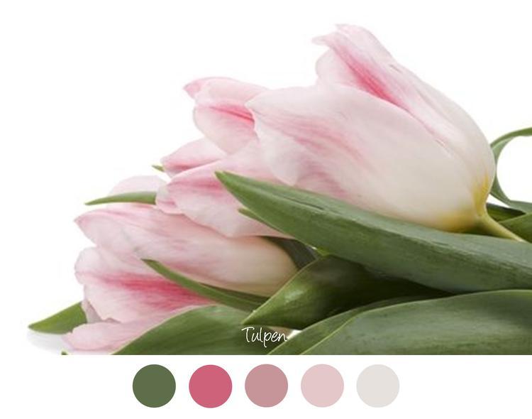 Kleurinspiratie Voor Slaapkamer : Tulpen bos roze tulpen zacht roze tinten en groen voor in het