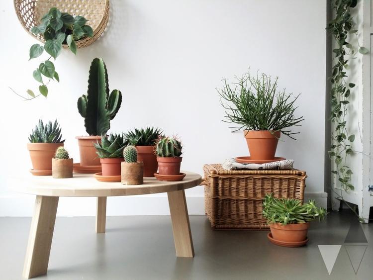 Potten Voor Planten.Planten Groeperen Plantentafel Cactussen En Vetplanten In