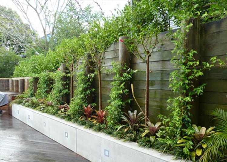 Genoeg idee voor een smalle border en kleine tuin.. Foto geplaatst door @NJ57