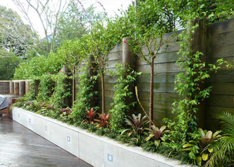 Tuin borderafscheiding potplanten buiten schaduw for Tuin inrichten planten