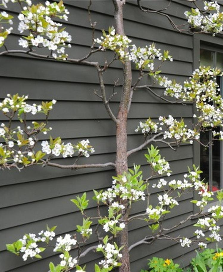 Planten tegen schutting best mooie boom tegen n schutting for Schutting intratuin