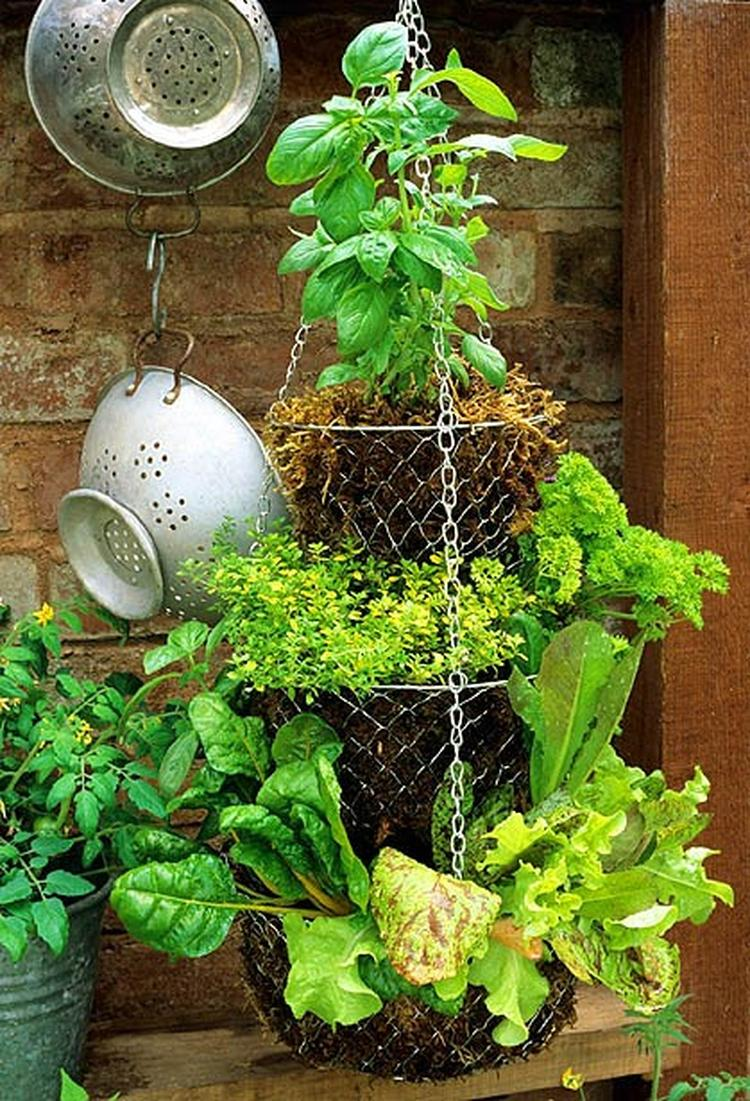 Oude fruitmand/etagere wordt verticale tuin. Super idee!. Foto ...