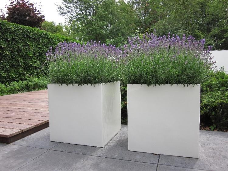 Lavendel In Grote Pot.Welke Planten In Bloembakken Pv 28 Blessingbox