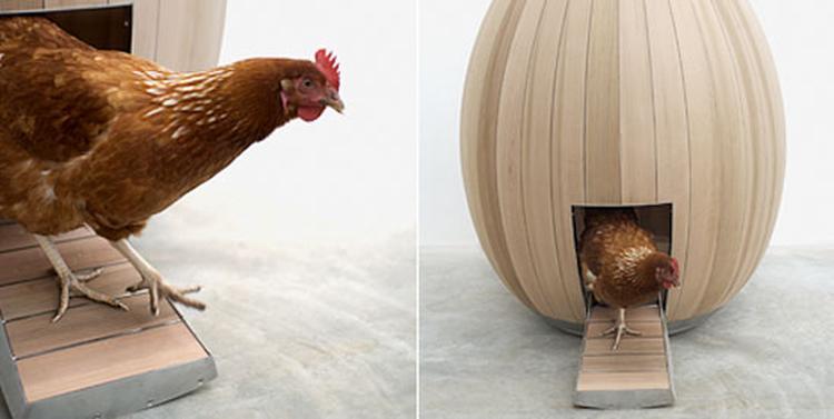 Ei Voor In De Tuin.Wat Was Er Nou Eerder De Kip Of Het Ei Kippenhok Nogg Doet Er Niet
