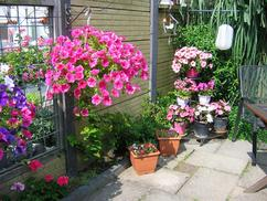 Zomerse Tuin Inspiratie : Beste afbeeldingen van tuin inspiratie de knusse tuin wicker
