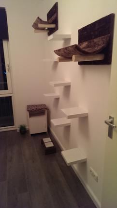 Plankjes Aan De Muur Voor Kat.Mijn Katten Paradijs Foto Geplaatst Door Anja 1 Op Welke Nl