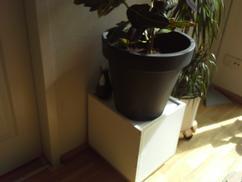 De Leukste Ideeën Over Plantenbak Vind Je Op Welkenl