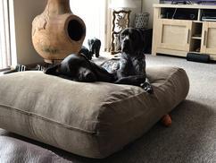 Design Voor Honden : Honden galerij dabo s design