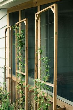 Klimrek Voor Planten.De Leukste Ideeen Over Planten Klimrek Vind Je Op Welke Nl
