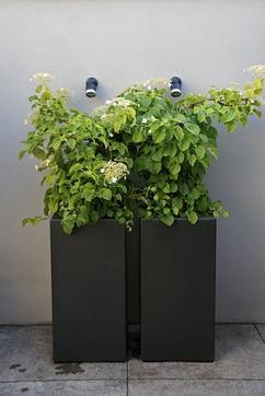 Bloembakken Buiten Intratuin.De Leukste Ideeen Over Plantenbak Vind Je Op Welke Nl
